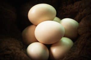 Read more about the article Effet sur la charge parasitaire, la production et la qualité des œufs des poules pondeuses