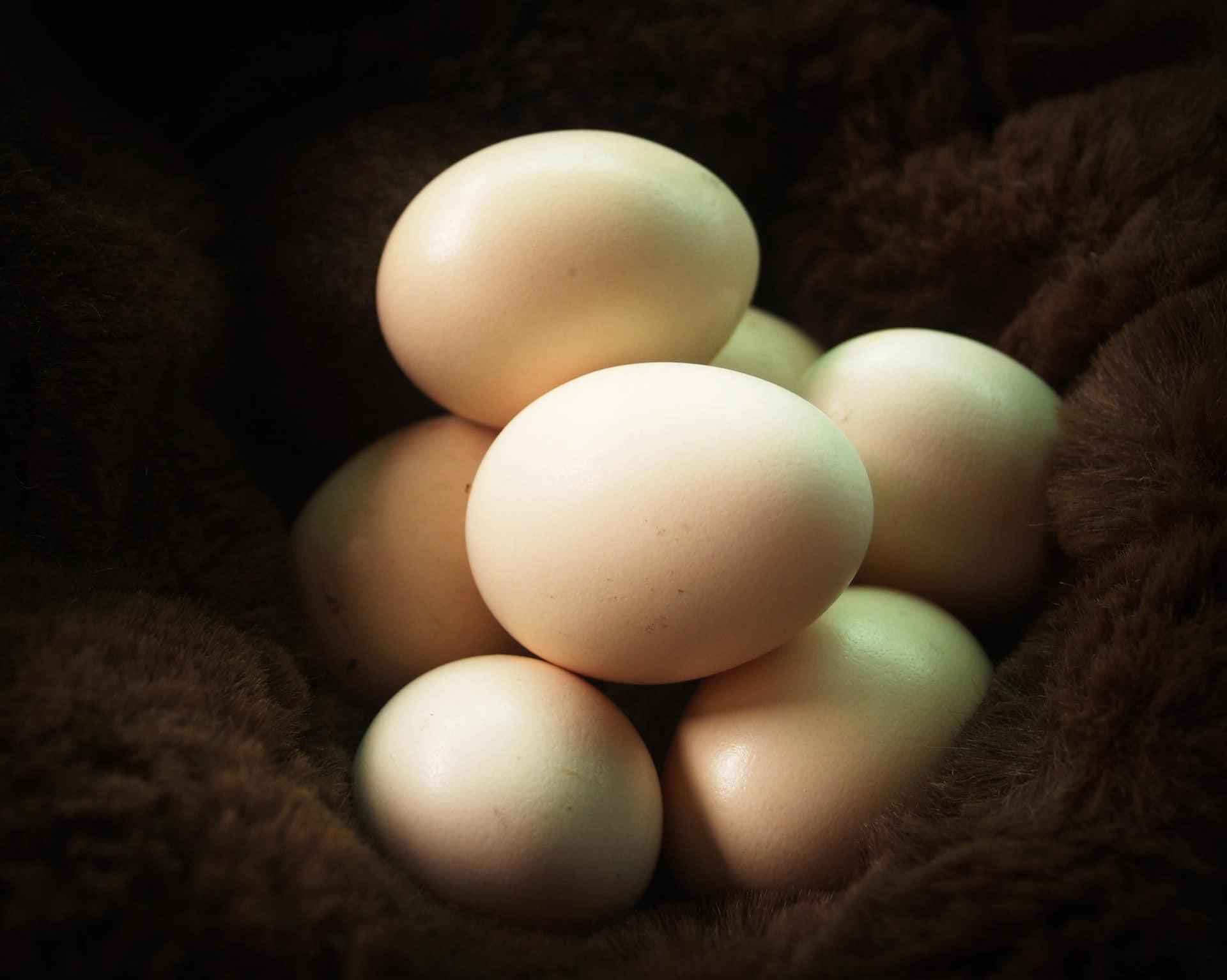 You are currently viewing Effet sur la charge parasitaire, la production et la qualité des œufs des poules pondeuses