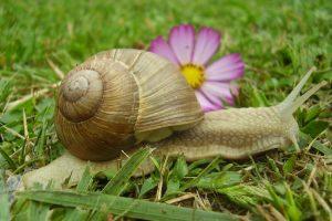Read more about the article La terre de diatomées contre les escargots ? NON