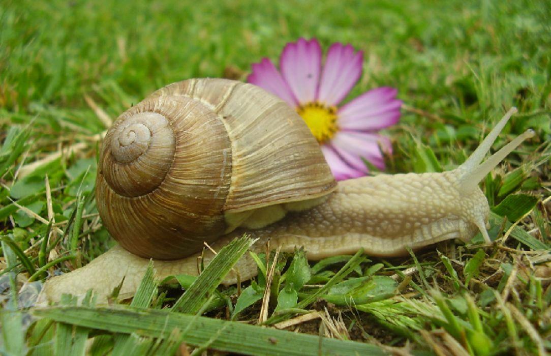 You are currently viewing La terre de diatomées contre les escargots ? NON