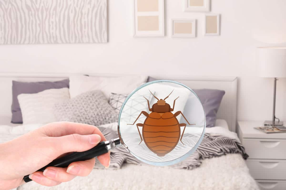 tuer les punaises de lit id es d coration id es d coration. Black Bedroom Furniture Sets. Home Design Ideas