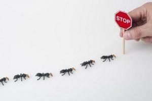 Read more about the article Stop aux invasions de fourmis