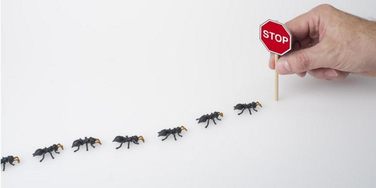 You are currently viewing Stop aux invasions de fourmis