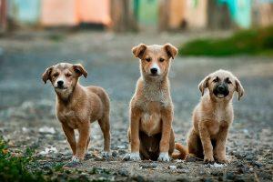 Read more about the article Quel est le meilleur vermifuge naturel pour votre chien ?