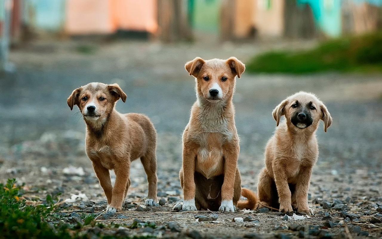 You are currently viewing Quel est le meilleur vermifuge naturel pour votre chien ?