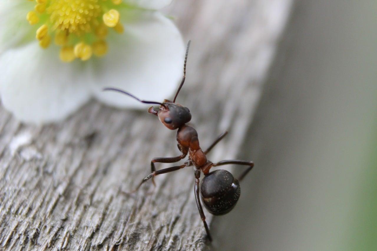Eloigner Les Fourmis Au Jardin terre de diatomée pour stopper une invsaion de fourmis dans