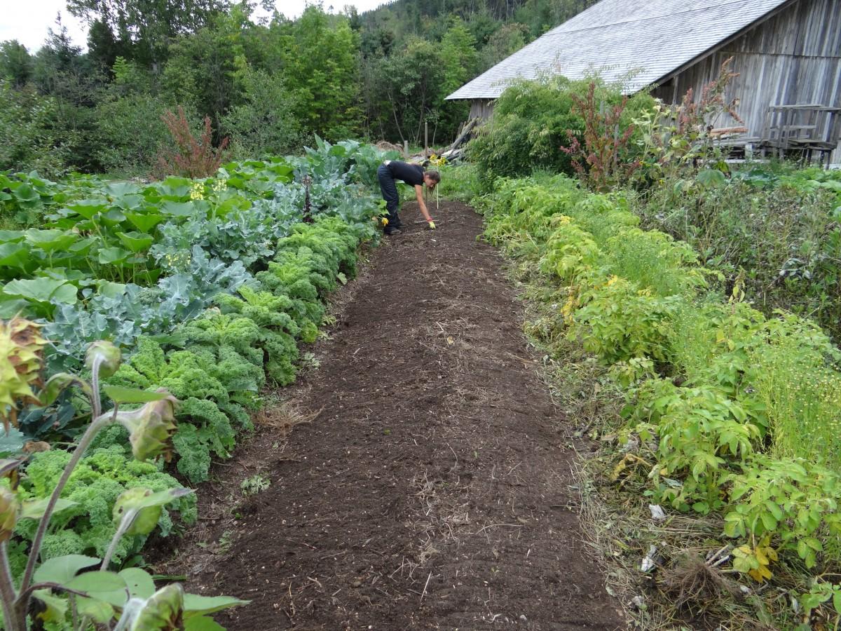 Le Jardin Potager En Janvier la terre de diatomée, produit naturel pour votre jardin